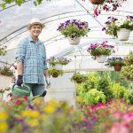 Folia i zastosowanie w ogrodzie